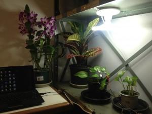 Ambiente para as plantas