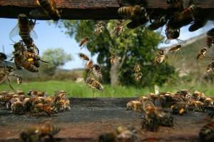 Le peuple des abeilles