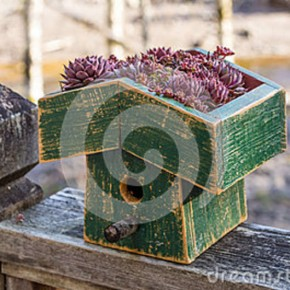 bird-house-living-roof-sedum-plants-30147455