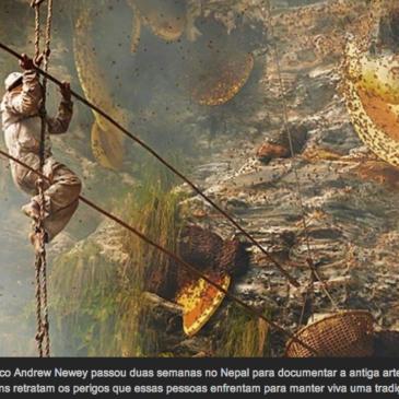 Os caçadores de mel do Himalaia